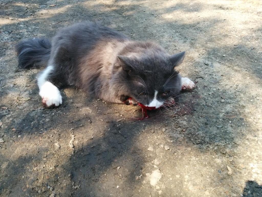 Видеть черных кошек и убивать их означает, что сновидец добрый человек.
