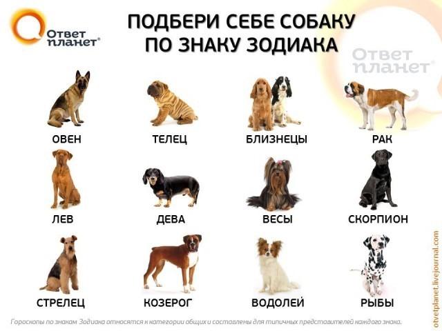 Полный бред,заводить себе собаку по знаку зодиака я телец, и у меня русский черный терьер и чихать я хотел, на то какому знаку он подходит главное что я его люблю светлана.
