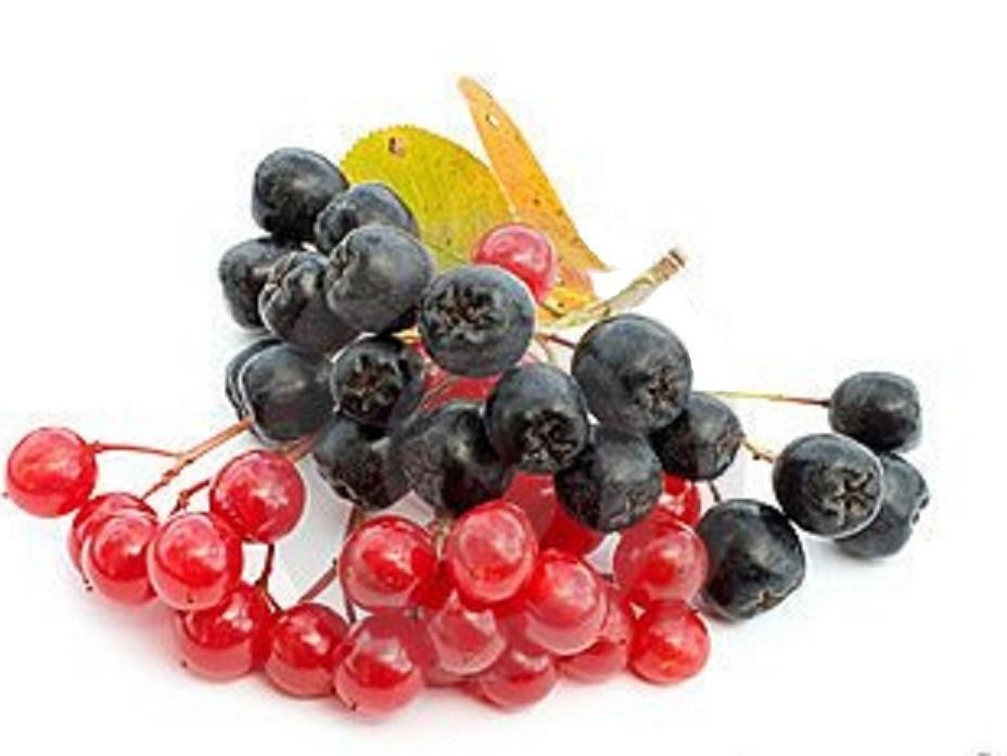 ягода черноплодной рябины на белом фоне в пнг