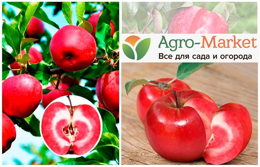 яблони и описанием мамба сорта
