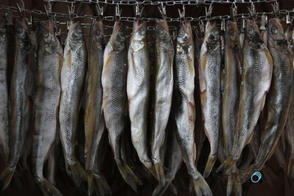 На данный момент в интернете можно отыскать миллионы рецептов засолки и вяления рыбы.