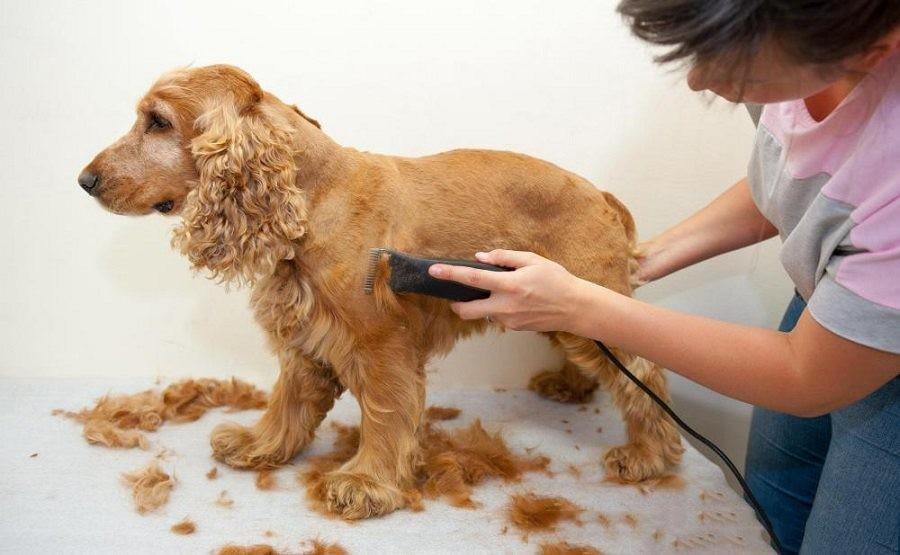 Нужно ли стричь собаку?