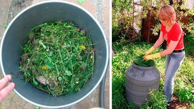 Как приготовить удобрение из крапивы коровяка и золы