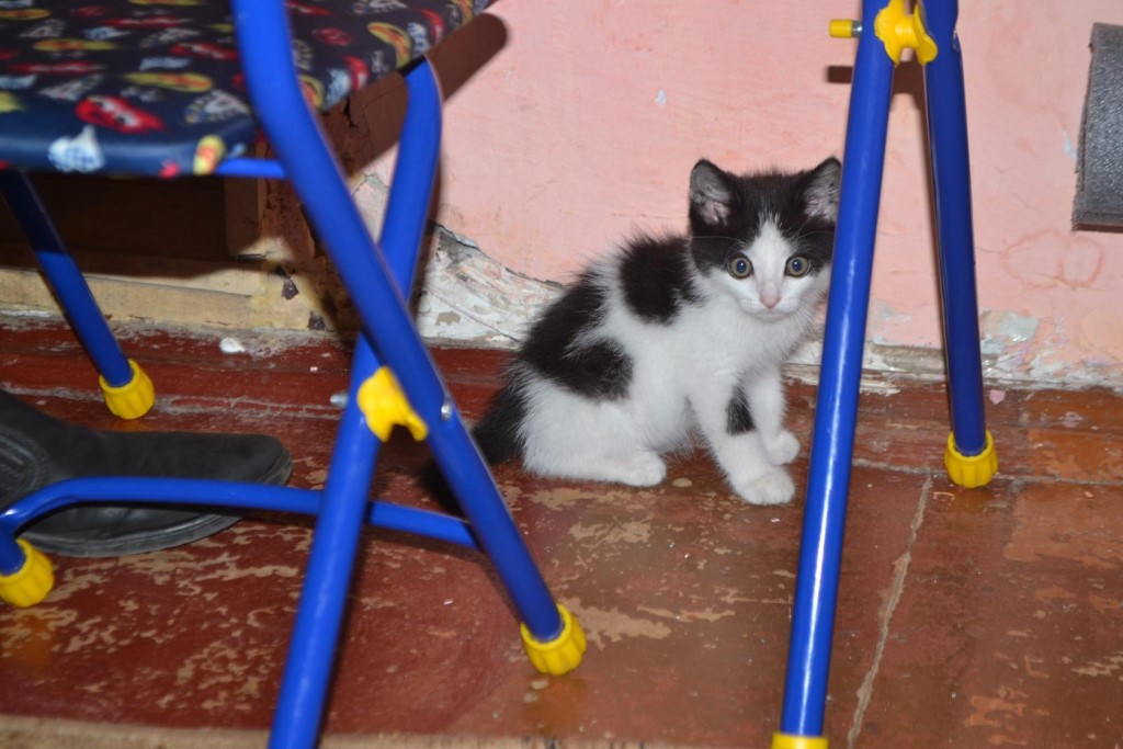Люди срочно кому нужен котенок мальчик подкинули во двор живет в холодном коридоре скоро уже осень может кто то сможет у себя приютить малыша кушает все , тел 89521761749