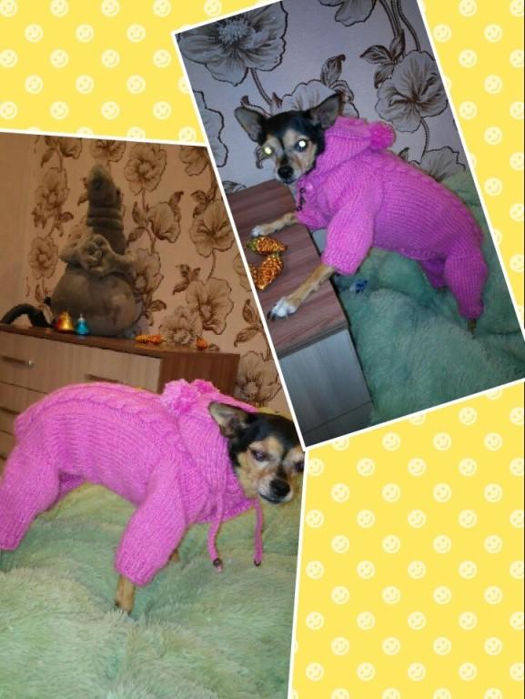 Вязанная одежда для собак и кошек.